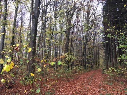 89584 Ehingen - Granheim, Flächen der Land- und Forstwirtschaft